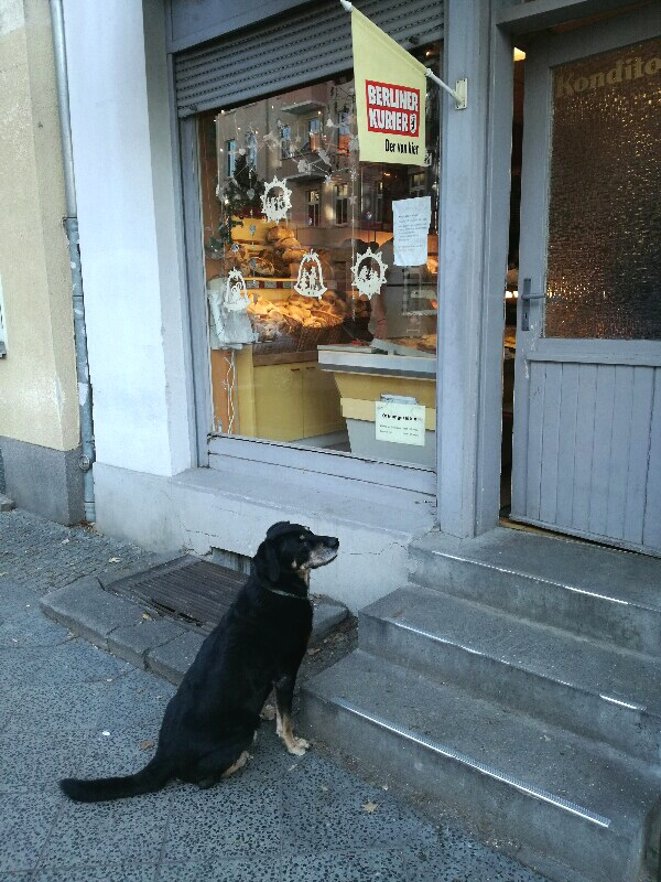 Waiting dog in front of a bakery near Baumschulenweg, Treptow, Berlin