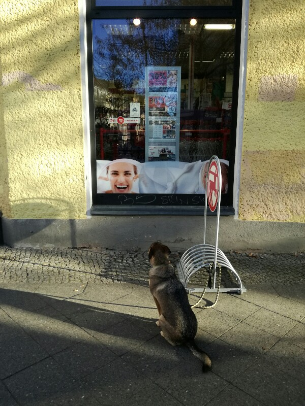 Streetphoto of dog waiting in front of a Rossmann drugstore near Baumschulenweg, Treptow, Berlin