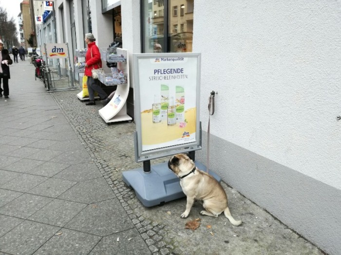 Waiting dog in front of a DM drugstore near Baumschulenweg, Treptow, Berlin